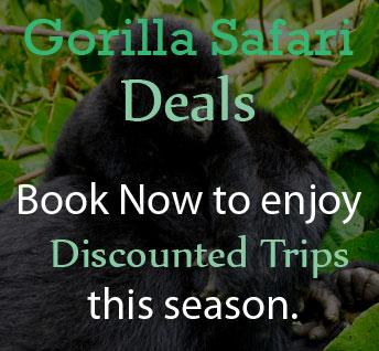 gorilla-safari-deals