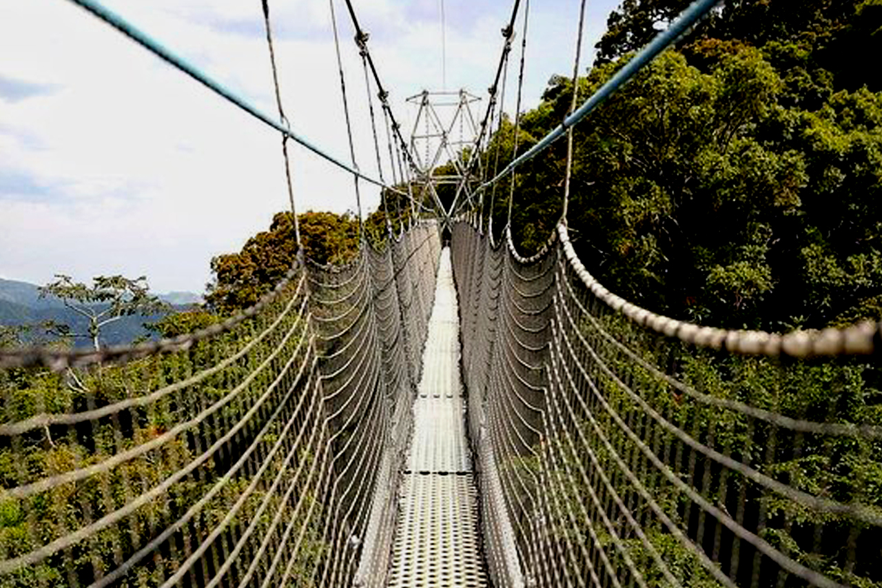 2 Days Nyungwe Forest Tour