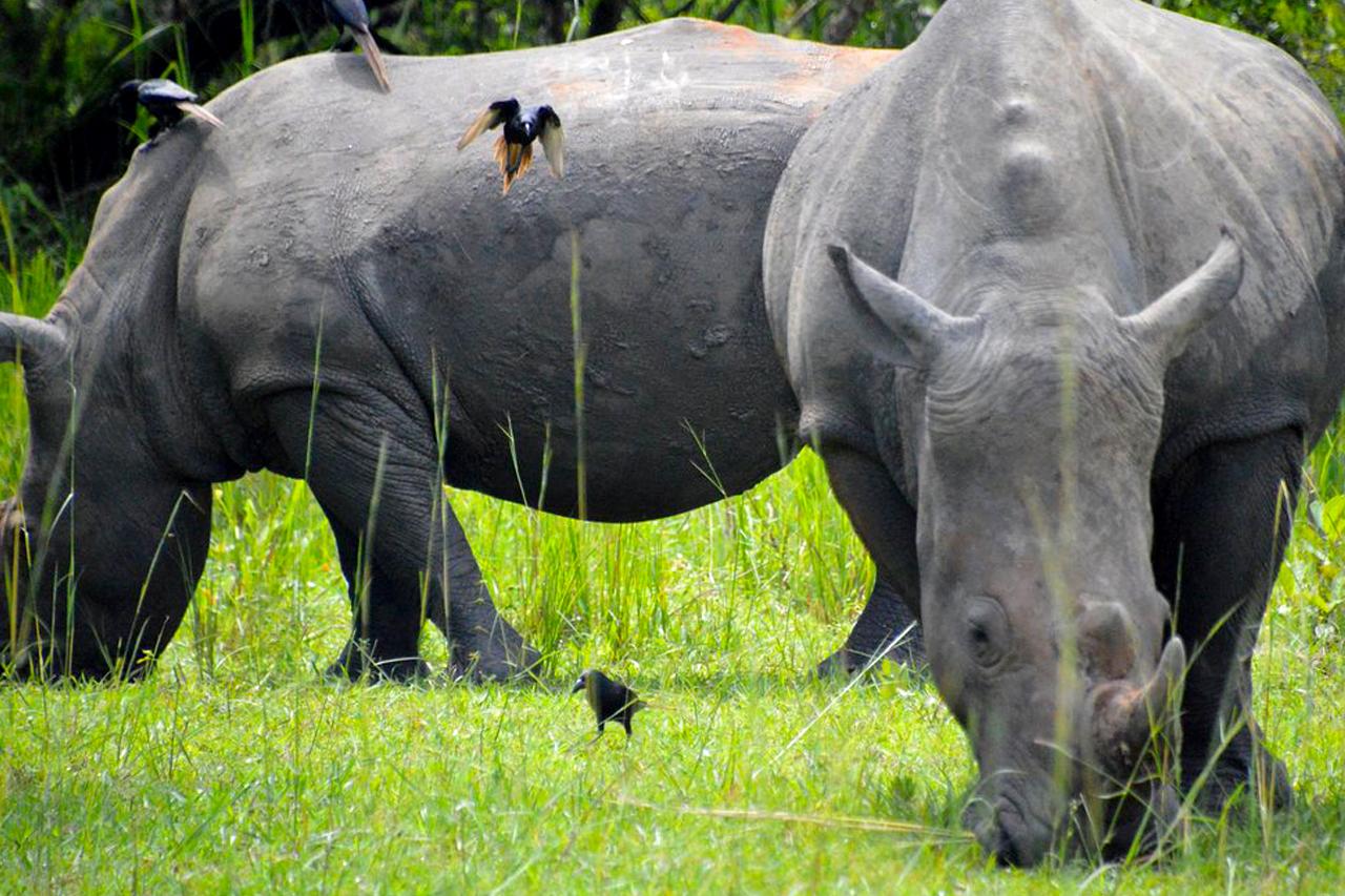 3 Days Murchison Falls and Rhino Tracking Tour